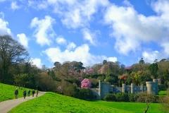 Caerhays-Castle-Spring-Gardens